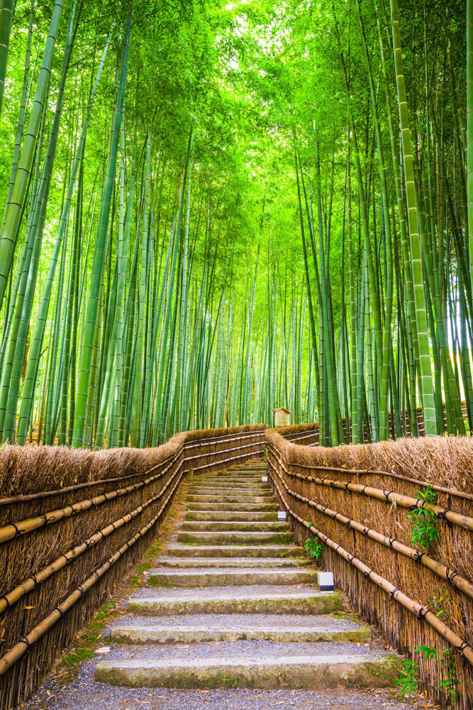 Bamboo forrest in Kyoto, Japan