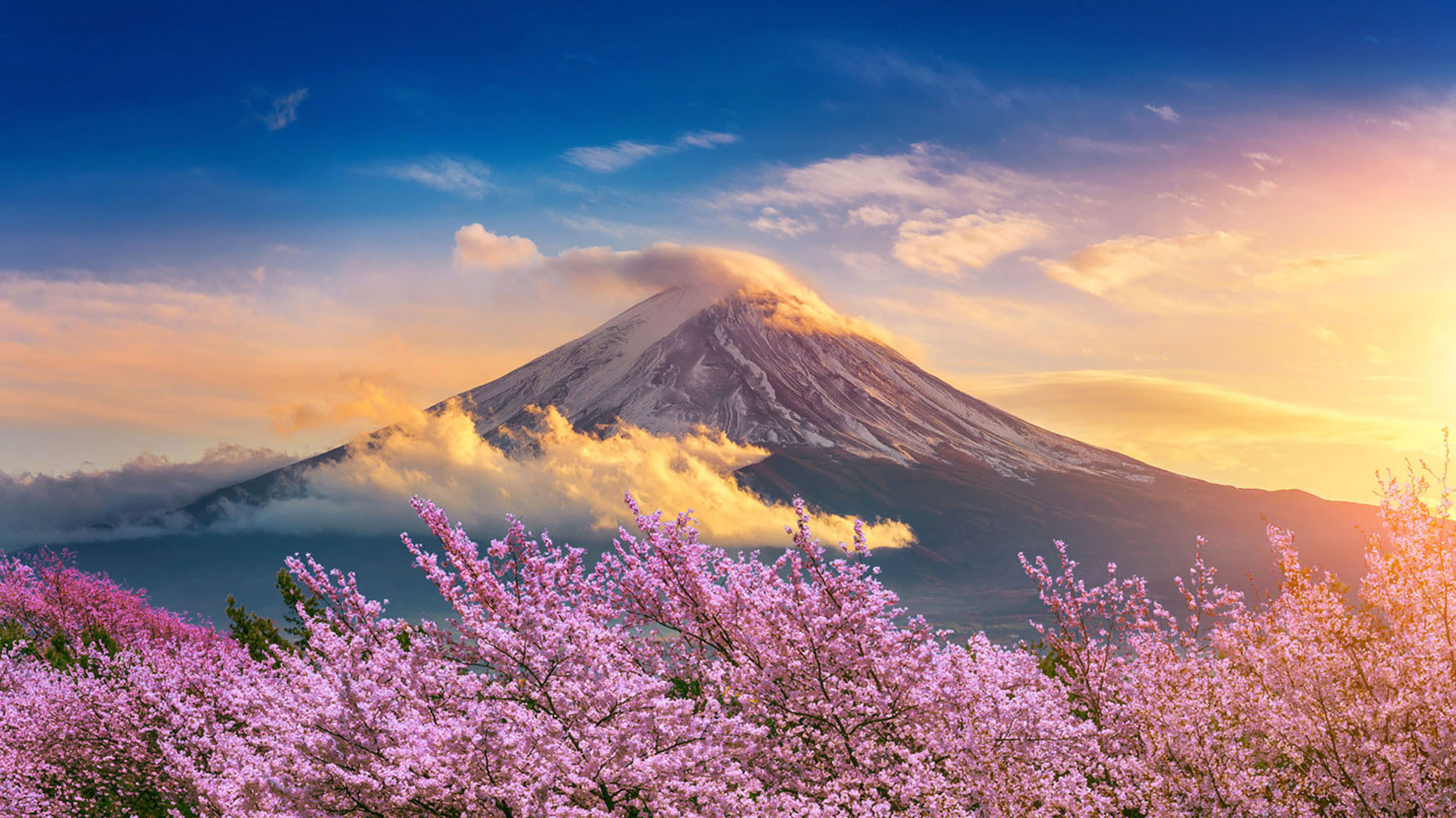 Fuji mountain and cherry blossoms in spring, Japan