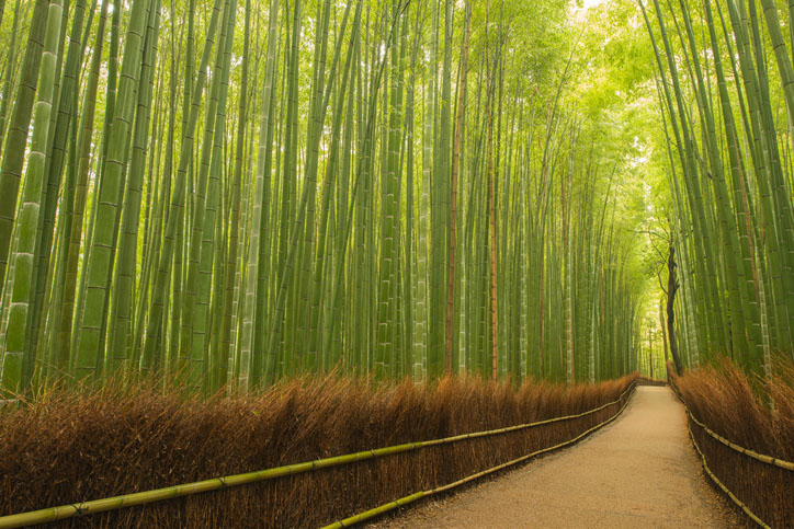 Small path in bamboo forest, Kyoto, Japan