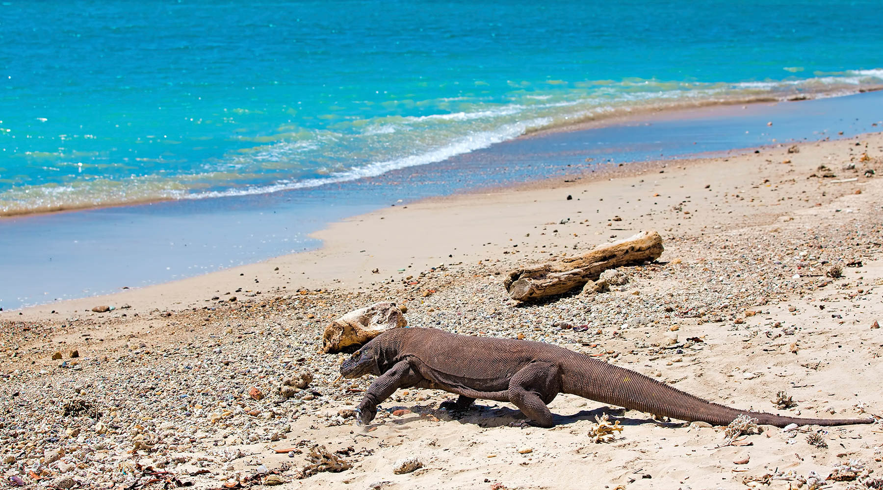 Live from Onboard the Azamara Quest: A Visit To Komodo Island