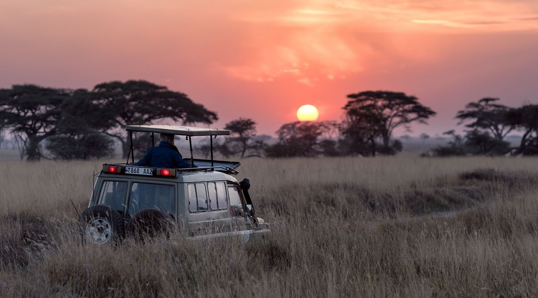 Animals to look out for on an African safari (besides the Big Five)