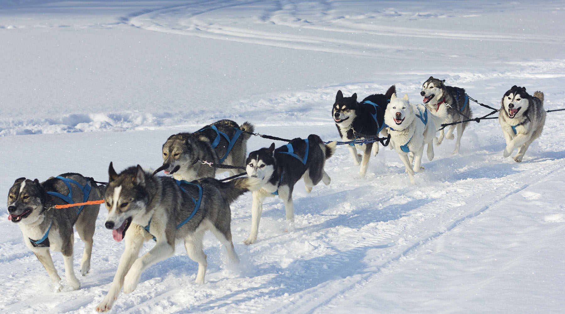 Iditarod Huskies, Antique Cars and Alaska Wilds (Pre-Voyage)