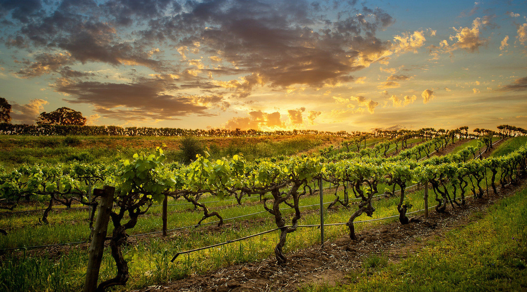 Wining and Dining Down Under