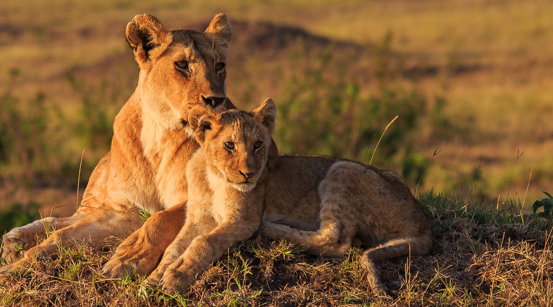 South Africa Land and Sea Packages