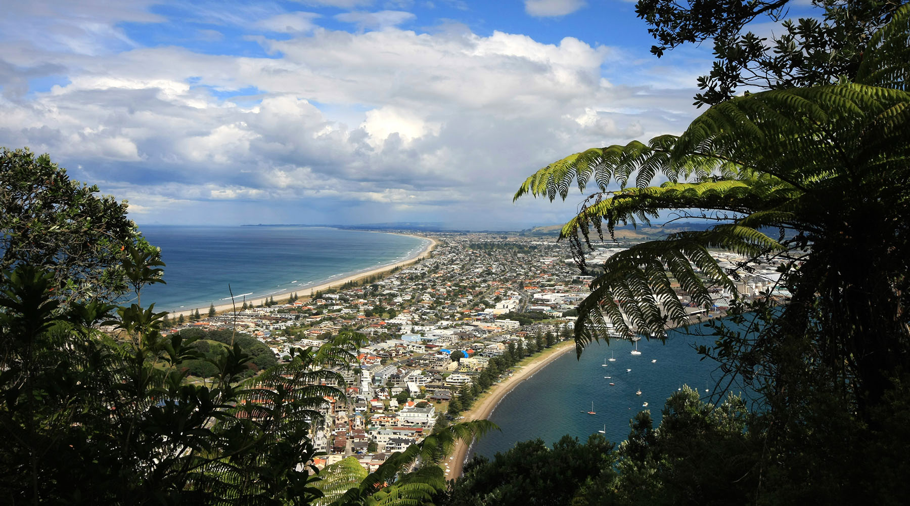 Discovering the Charms of Tauranga, New Zealand
