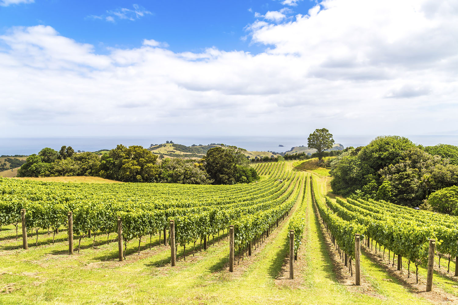 Visiting vineyards and tasting wine is a must when in New Zealand.