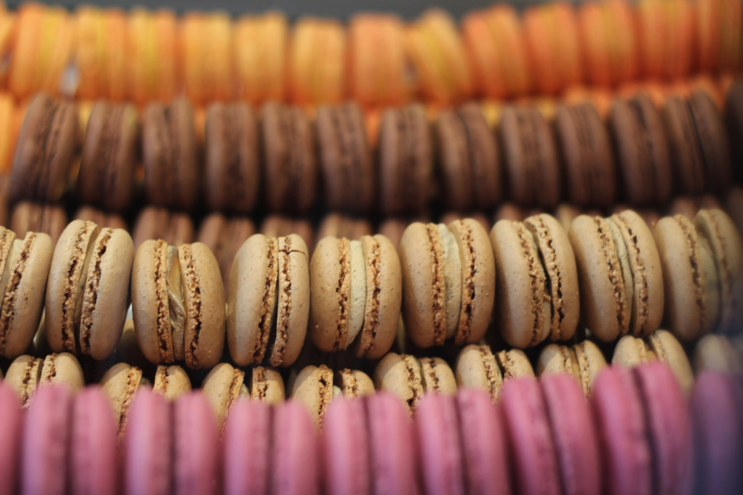 French macarons in colourful rows
