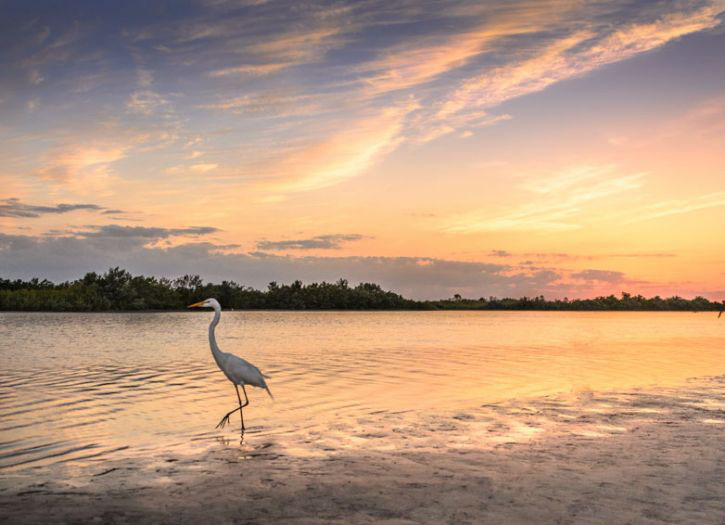 Everglades Eco-Adventure Guided tour with Airport Drop Off to MIA or FLL