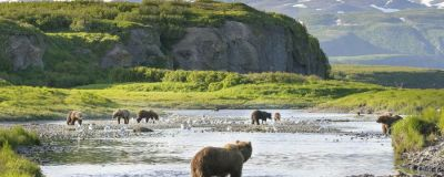 A group of bears in a lake in Alaska, with a mountain range in the background.